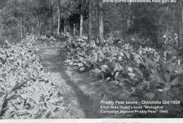 Prickly Pear 1928.jpg