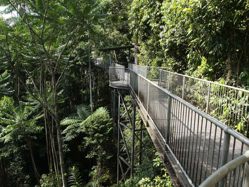 Part of the 350 metre elevated walkway at Mamu Rainforest Canopy Walkway. & Innisfail QLD - Aussie Towns