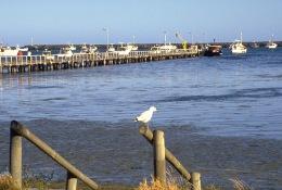 Port MacDonnell